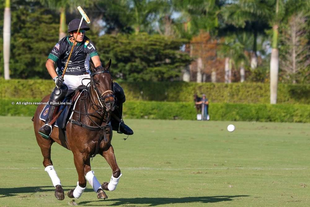 Aliano Realty / Horseware vs Palm Beach Equine