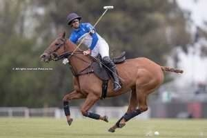"""""""When it comes to polo horses, every stage of training is of equal importance"""""""