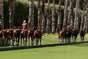 Ayala Polo Club takes Sotogrande into a thrilling new era